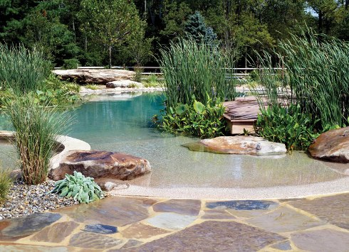 How Does a Natural Swimming Pool Work? - Luxury Pools + ...